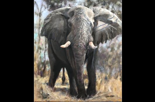 home-elephant