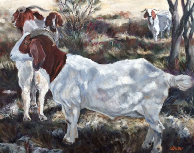 Goats-Steve Boster-Boer Goats in the Shadows
